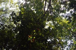 Tree alight small